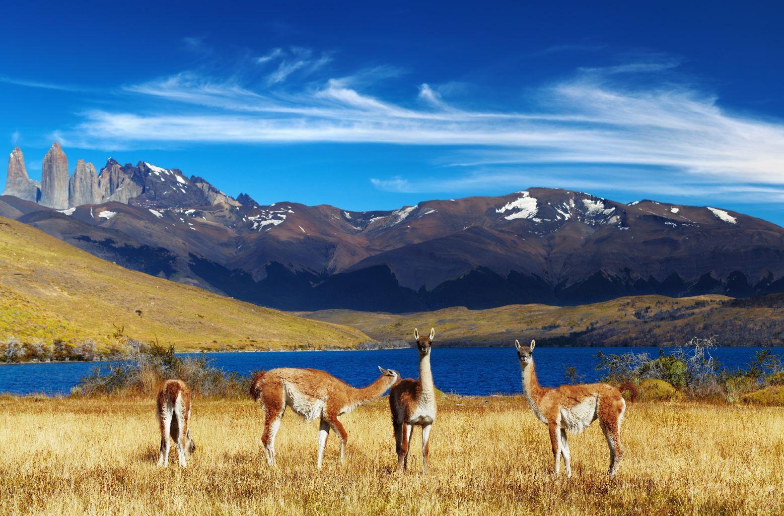 Jižní Amerika - Chile