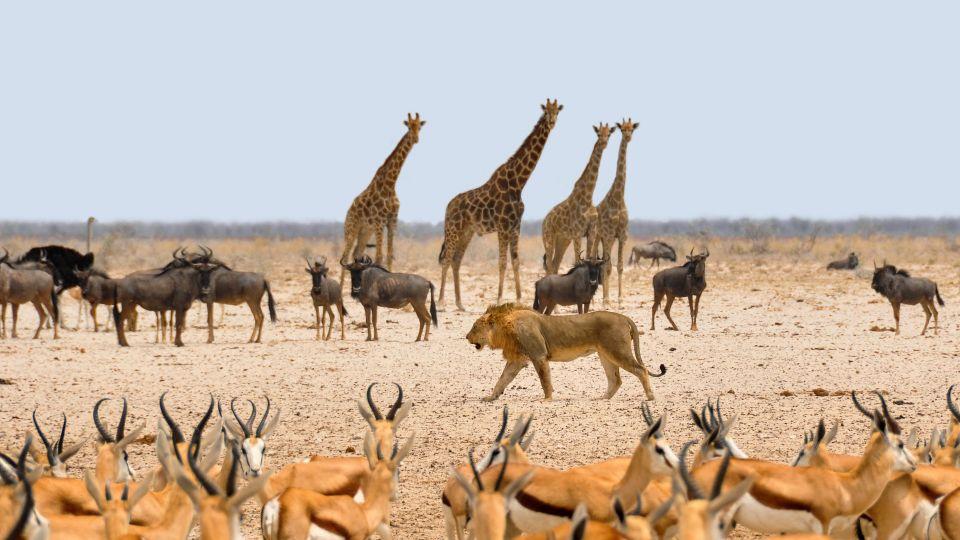 Namibie v létě
