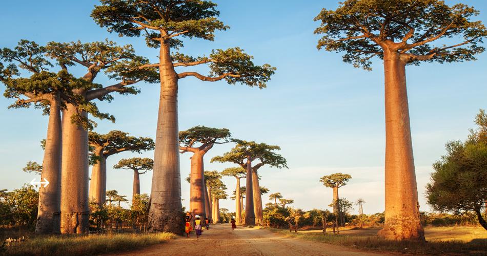 Madagaskar z Milána – 11 990 Kč