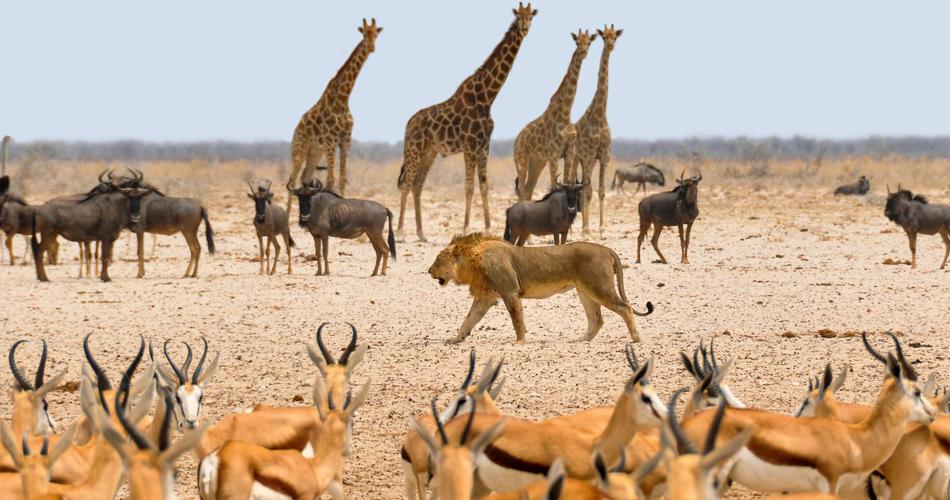 Namibie v létě od 9528 Kč