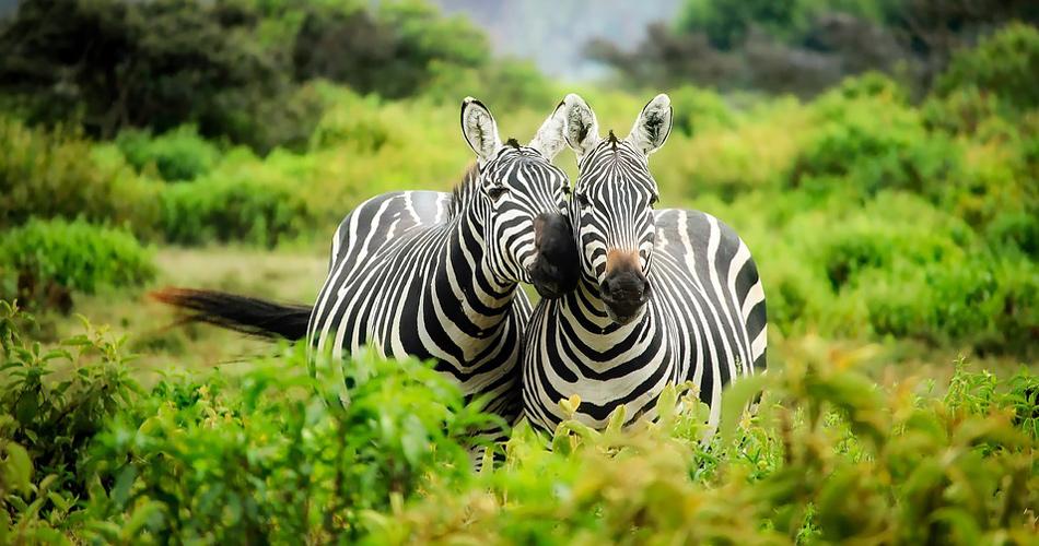 Do Keni na safari za 6 240 Kč