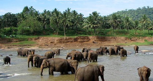 Srí Lanka z Kyjeva za 5 515 Kč