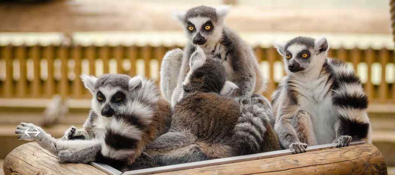 Madagaskar1.jpg