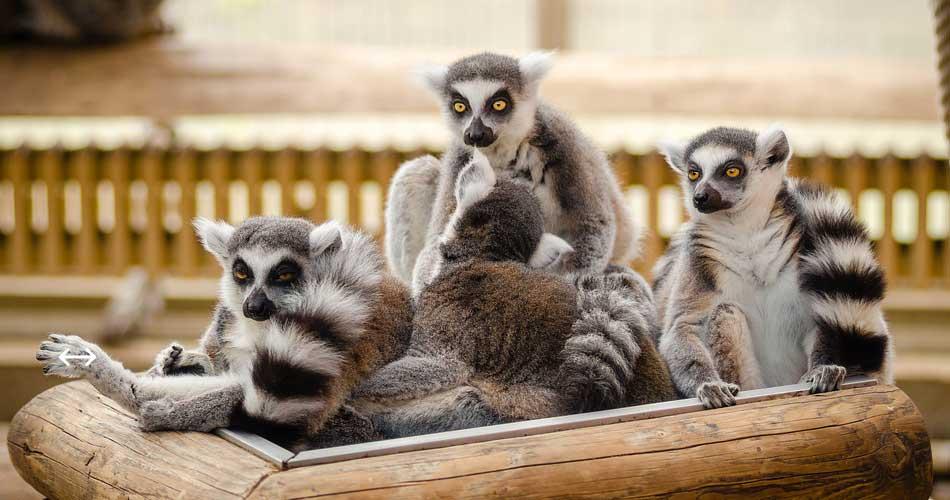 Madagaskar – Antananarivo od 12 840 Kč