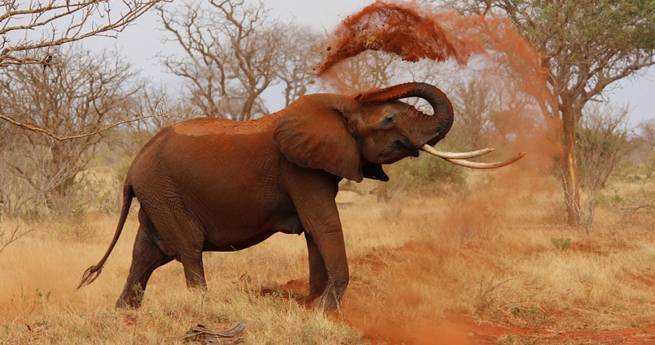 Keňa – Nairobi 5 873 Kč