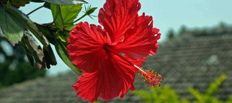 Okinawa-fotka.jpg