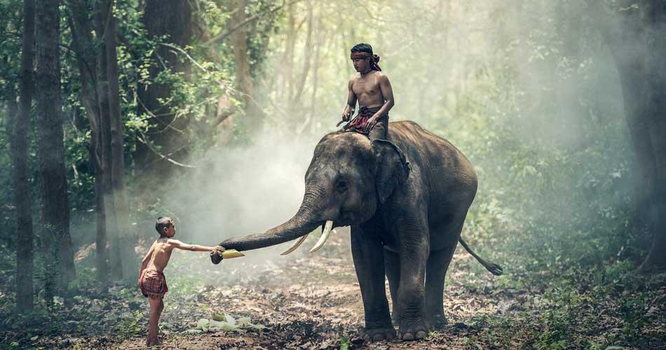 Srí Lanka či Thajsko – 11 855 Kč
