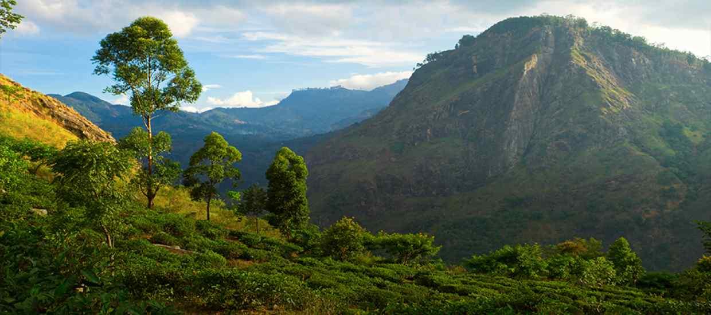SriLankaOman-ciste-copy.jpg