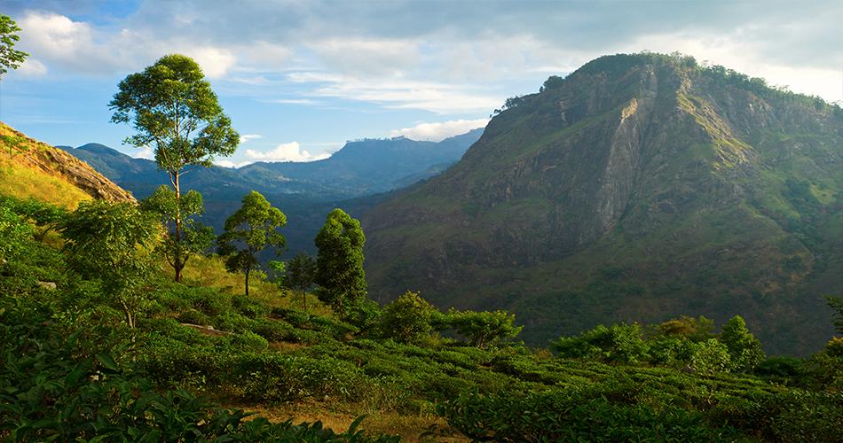 Srí Lanka a Omán v jednom za 11 446 Kč