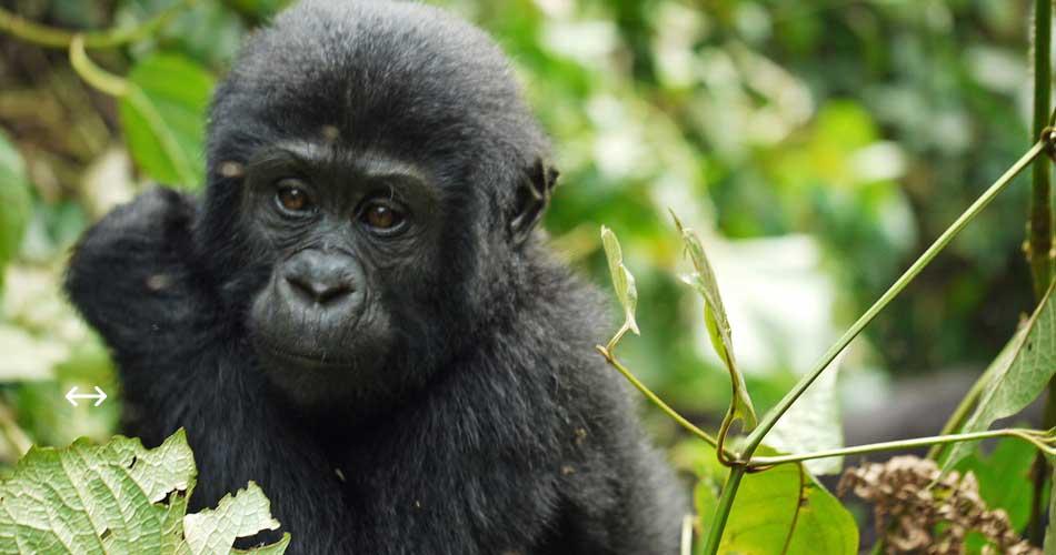Rwanda i Uganda nejen z Norimberku