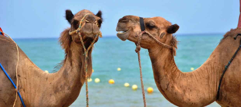 Egypt-BT.jpg