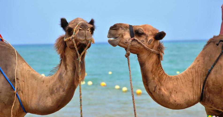 Last minute – zájezd do Egypta za 4 259 Kč