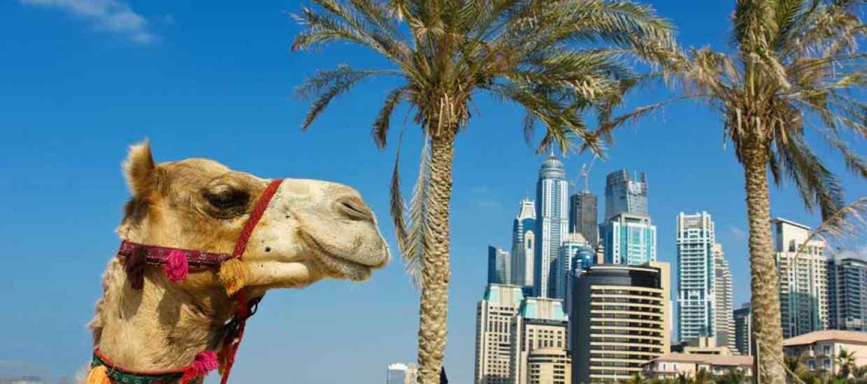 Dubaj_web1.jpg