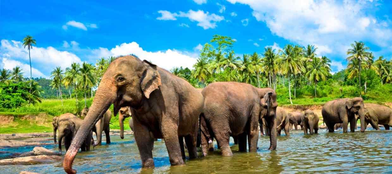 Sri-Lanka-BT.jpg