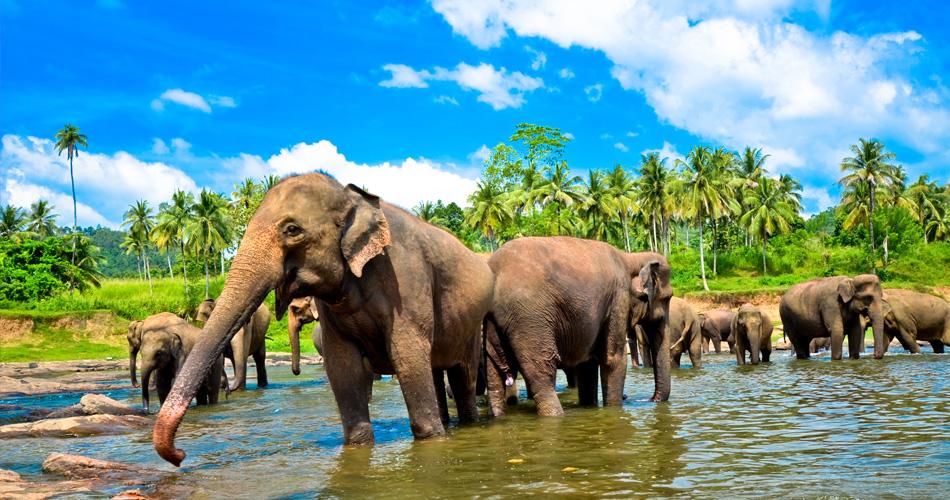 Káthmándú, Srí Lanka či Goa