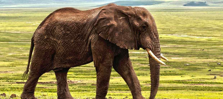 elephant-1421167_960_720.jpg