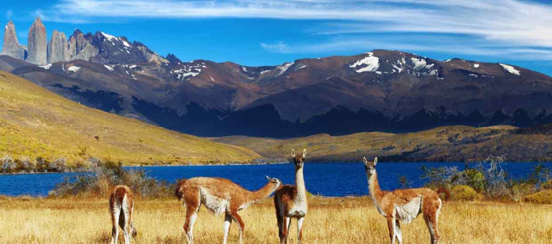 Chile-BT-S.jpg