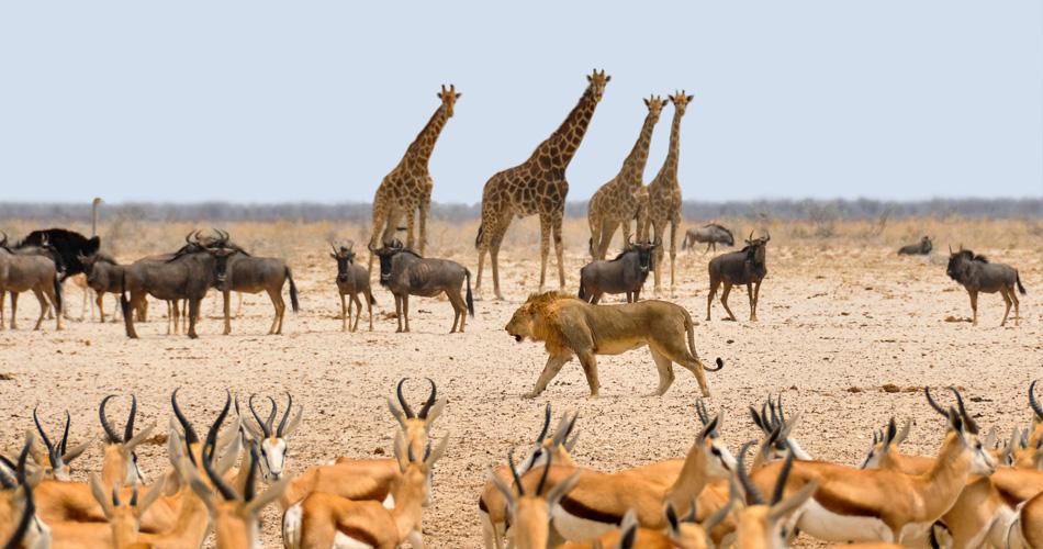 Namibie a Jihoafrická republika od 11 202 Kč