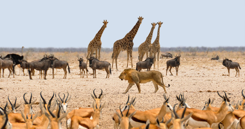 Namibie a Jihoafrická republika