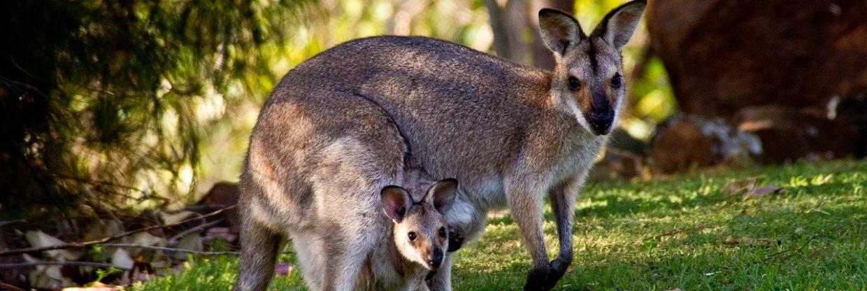 Austrálie – Sydney – 16 513 Kč