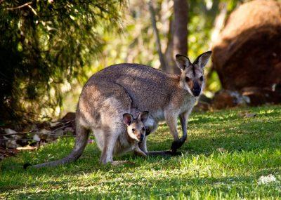 Austrálie - Sydney - 16 513 Kč