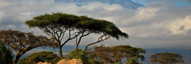 Keňa – Nairobi z Vídně za 9 894 Kč
