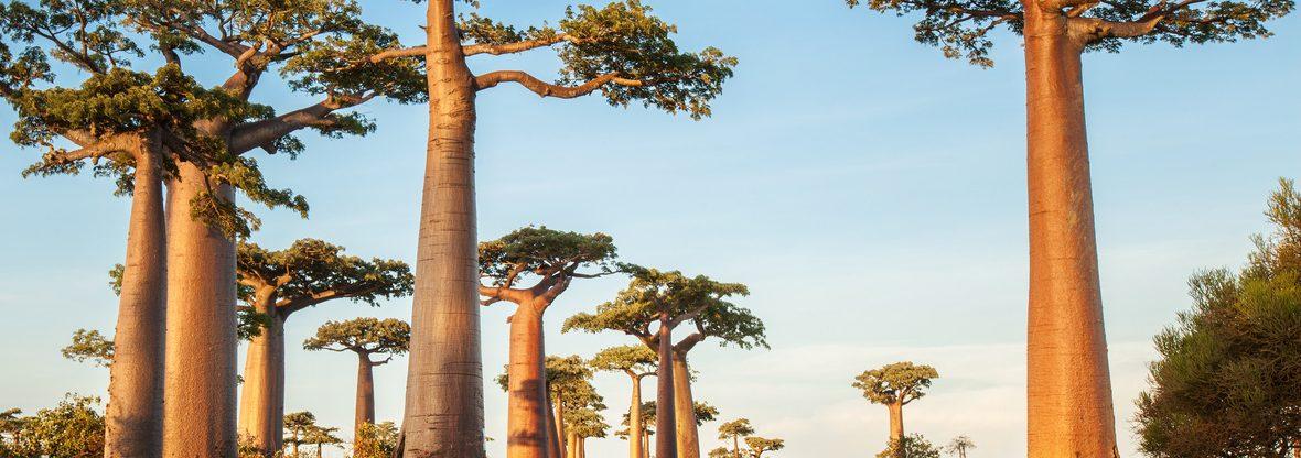 Madagaskar z Vídně za 14 995 Kč