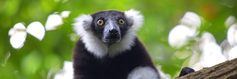 Madagaskar z Vídně od 14 998 Kč