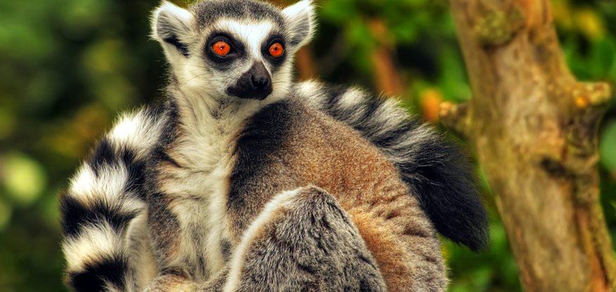 Madagaskar z Vídně