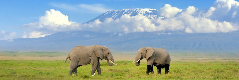 Na safari do Tanzanie: Kilimandžáro z Vídně