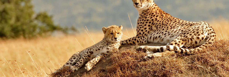 Keňa: na pravé africké safari z Prahy