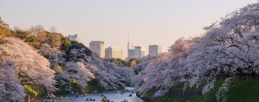 Z Vídně do Tokia nejen za kvetoucími sakurami