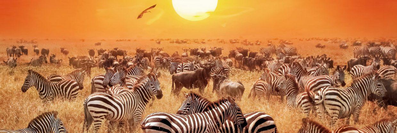 Keňa z Prahy: za divokou africkou faunou po celý rok