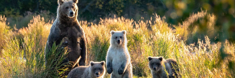 Za nespoutanou přírodou do USA na Aljašku (z Vídně)