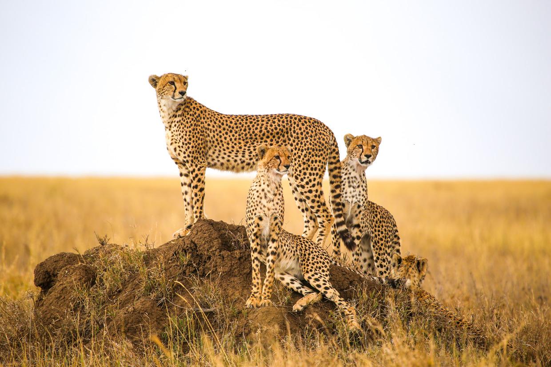 Tanzanie - safari, národní parky, divoká zvířata
