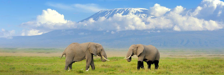 Do Tanzanie na safari: Kilimandžáro z Vídně s Qatar Airways