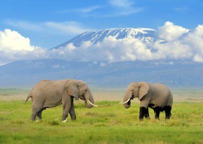 do Tanzanie na safari