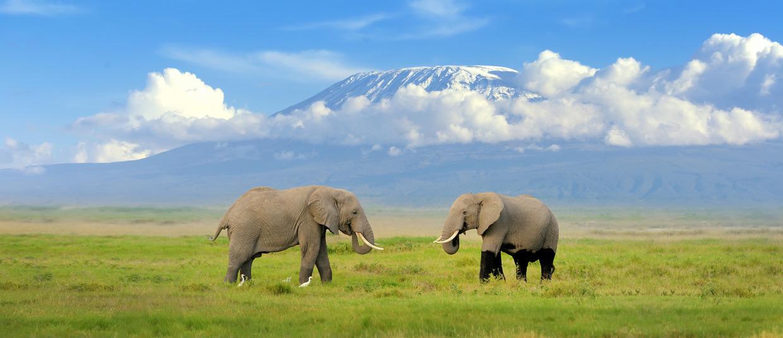 Tanzanie dovolená