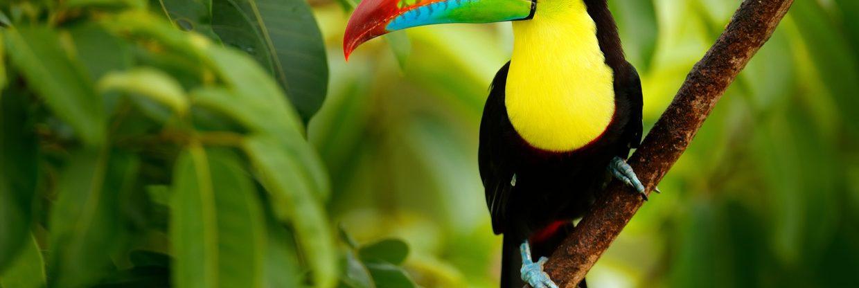 Prázdninové letenky do Kostariky: z Vídně do Libérie i San José