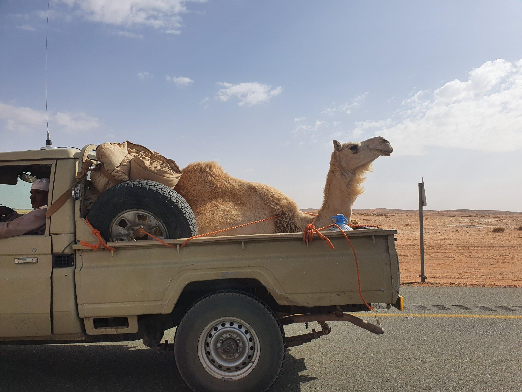 Zápisky z cest: Saúdská Arábie stylově - II. díl