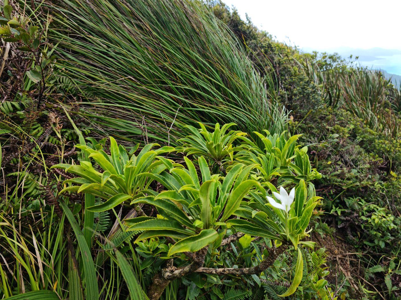 Francouzská Polynésie – 5. díl (Maupiti a Raiatea)