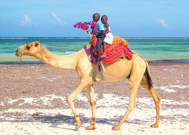 Letenky na Djerbu za 3396 Kč