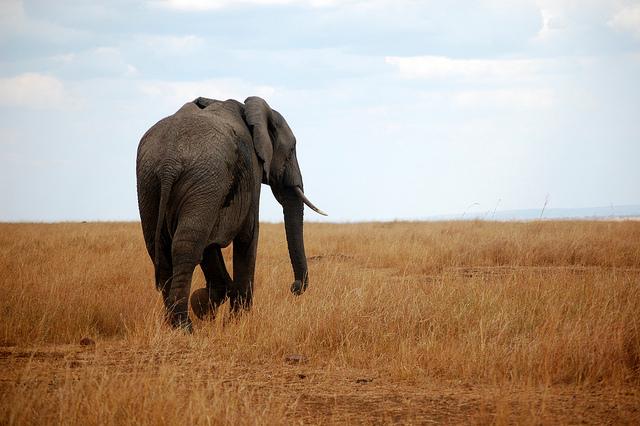 Vánoční safari a pláže v Keně – 5947 Kč