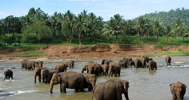 Srí Lanka – Colombo – 12 690 Kč