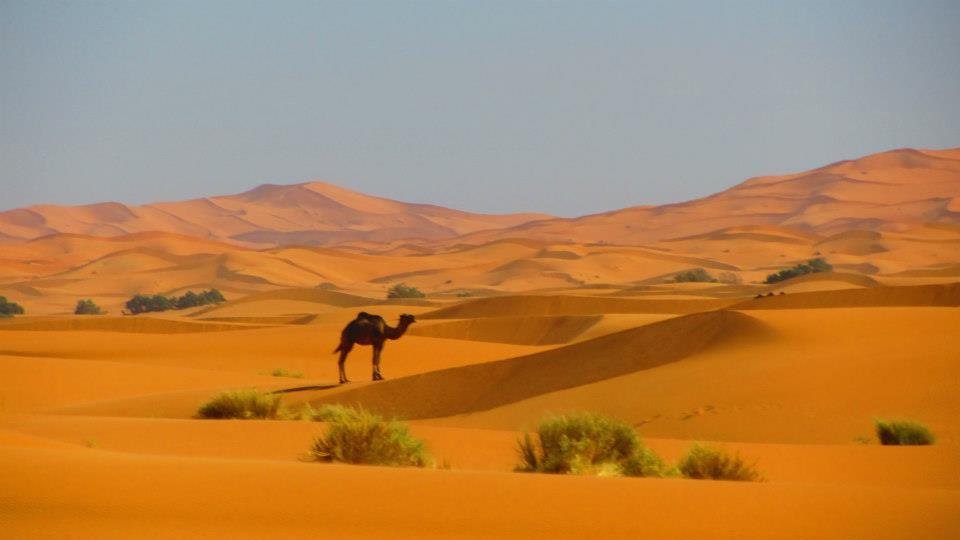 Maroko – Marakéš – Easyjet – 2365 Kč