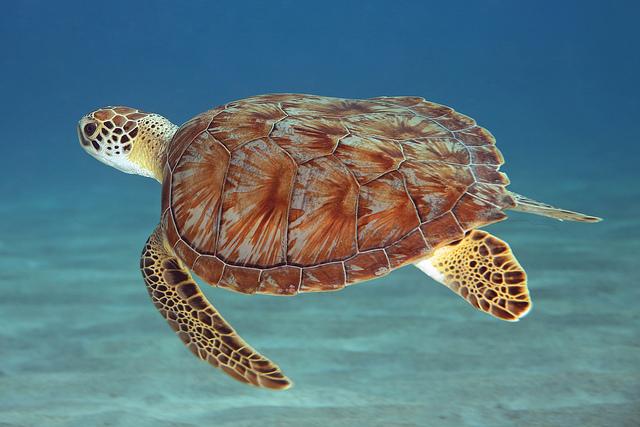 Karibik – Curacao – 11 890 Kč