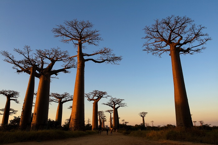 Madagaskar včetně Vánoc za 16545 Kč