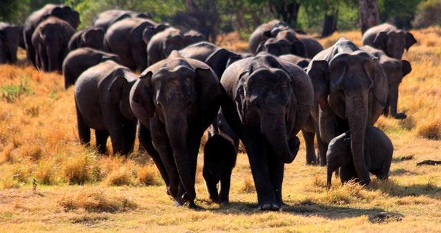 Srí Lanka – Emirates – 13 402 Kč