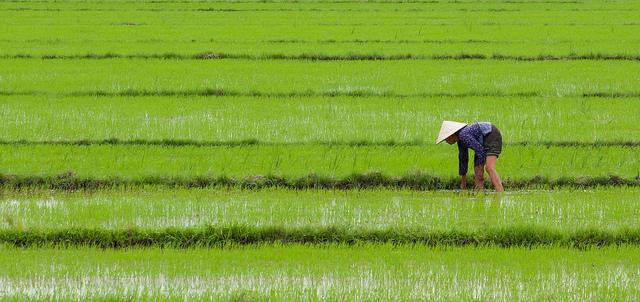 Vietnam – Ho Či Minovo Město – 10 847 Kč
